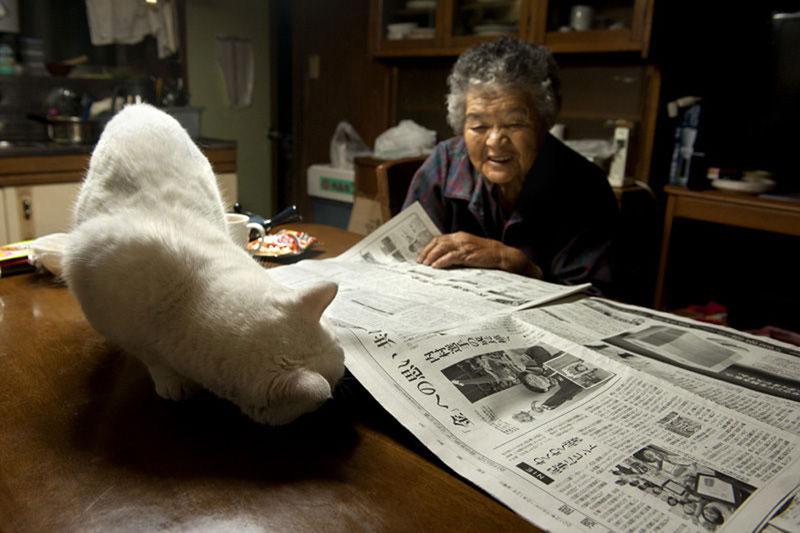 japonés abuela y su gato miyoko ihara (6)