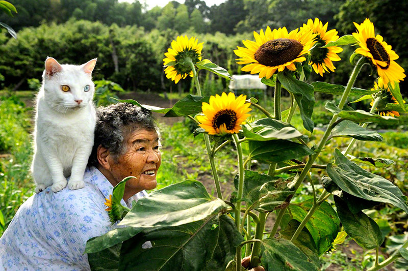 japanese grandma and her cat miyoko ihara 7 This Cat Loves to Stick its Tongue Out