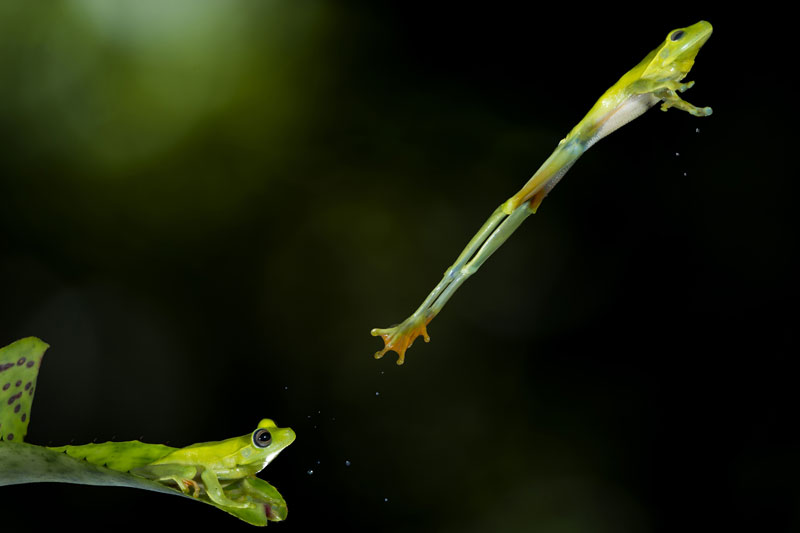 1 hudson garcia brazil finalist nature wildlife Smithsonian Magazines 10th Annual Photo Contest [25 pics]