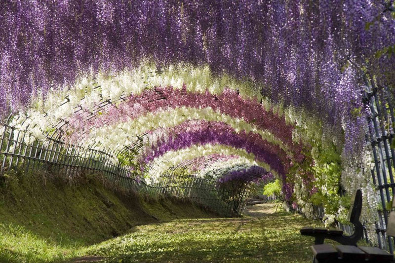 flower tunnel japan