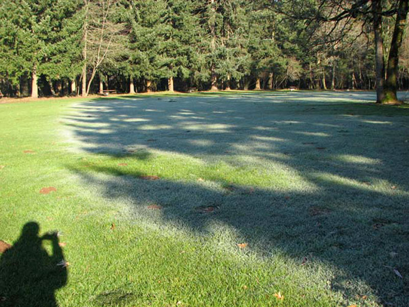 frost shadows (10)
