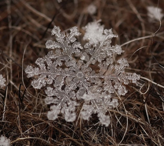 macro photograph of a snowflake by andrew osokin (1)