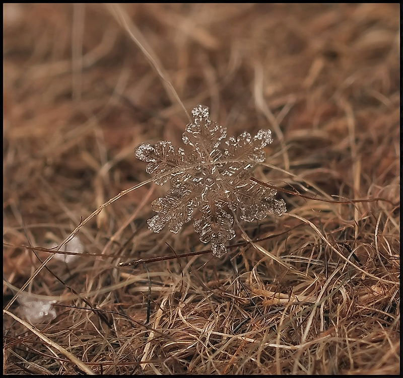 macro photograph of a snowflake by andrew osokin (10)