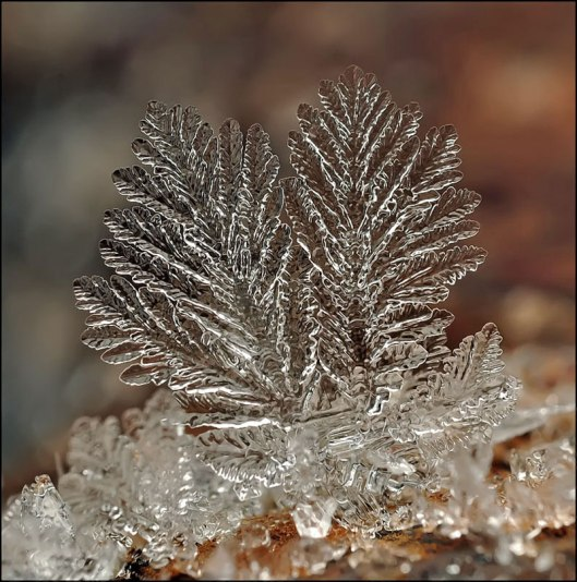 macro photograph of a snowflake by andrew osokin (6)