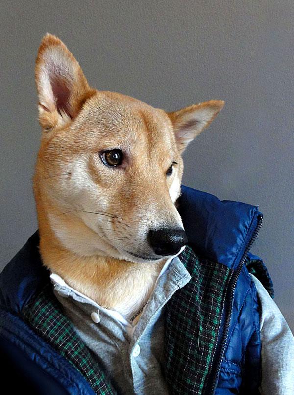 Bodhi, the World's Best DressedDog