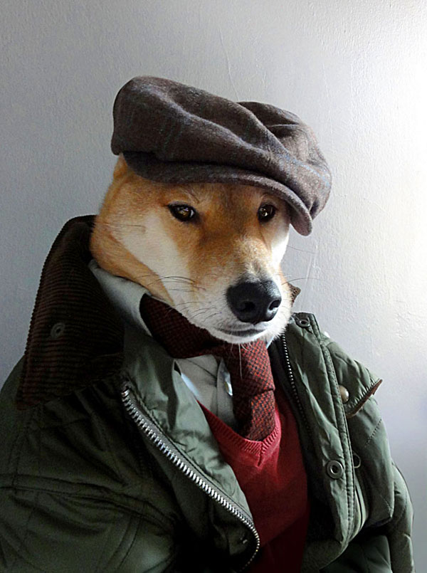 menswear dog dressed in clothes fashion look book (4)