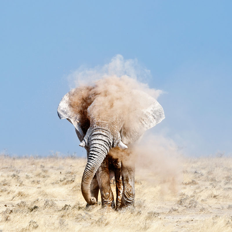 Peter-Delaney,-South-Africa,-Shortlist,-Nature-Wildlife,-Open-Competition-2013