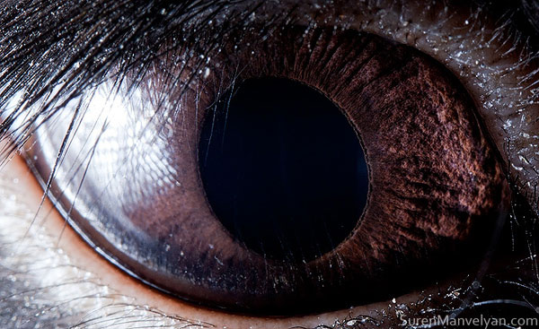 black rabbit close up of eye macro suren manvelyan 10 Detailed Close Ups of Animal Eyes
