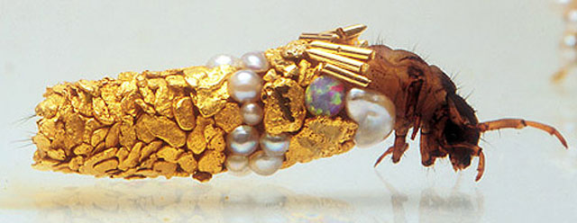 caddisfly-larvae-art-gold-case-hubert-duprat-(1)