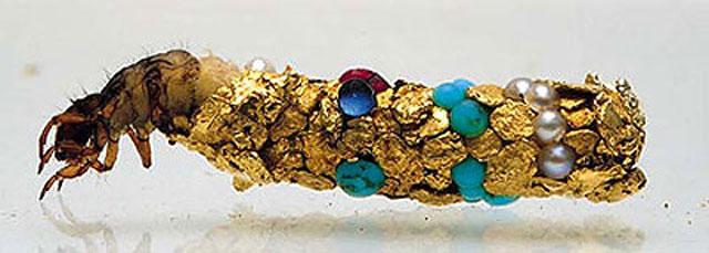 caddisfly-larvae-art-gold-case-hubert-duprat-(2)