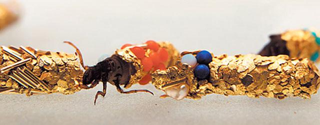 caddisfly-larvae-art-gold-case-hubert-duprat-(4)