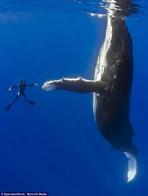 diver whale high five perfect timing