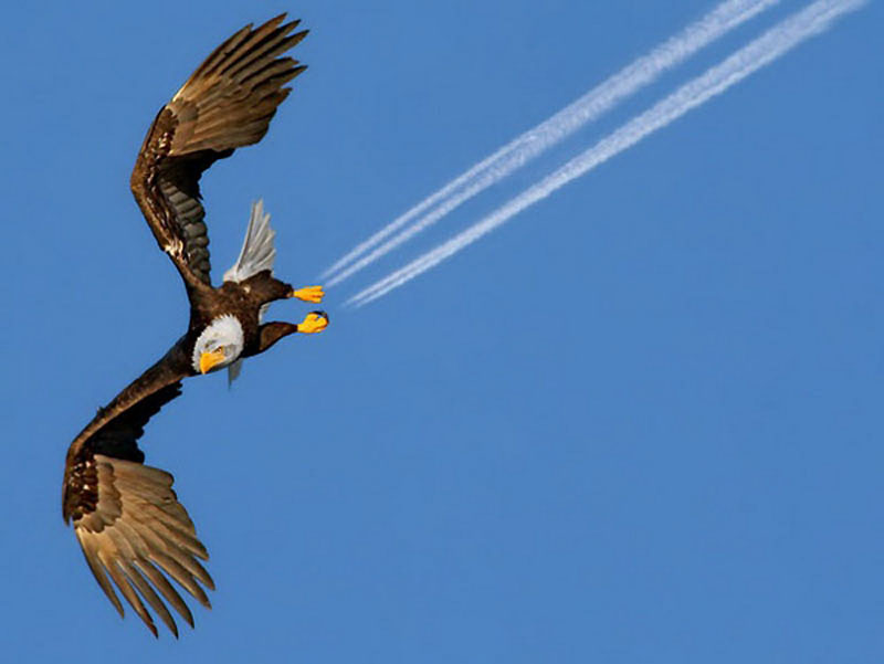 eagle perfect timing