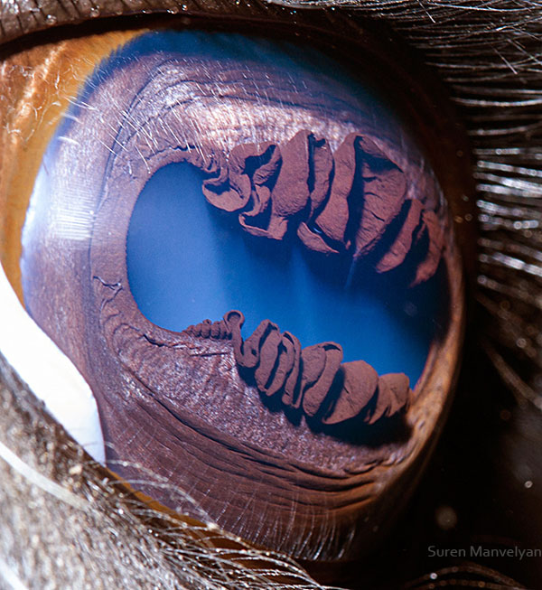 llama close up of eye macro suren manvelyan 25 Microscopic Images of Snow Crystals