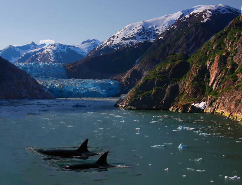 Picture of the Day: Orcas inAlaska