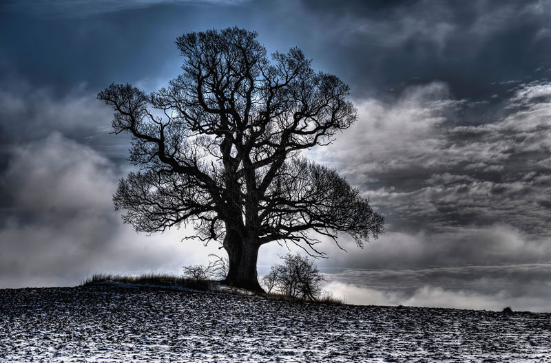 tree in winter dormancy Picture of the Day: Winter Tree