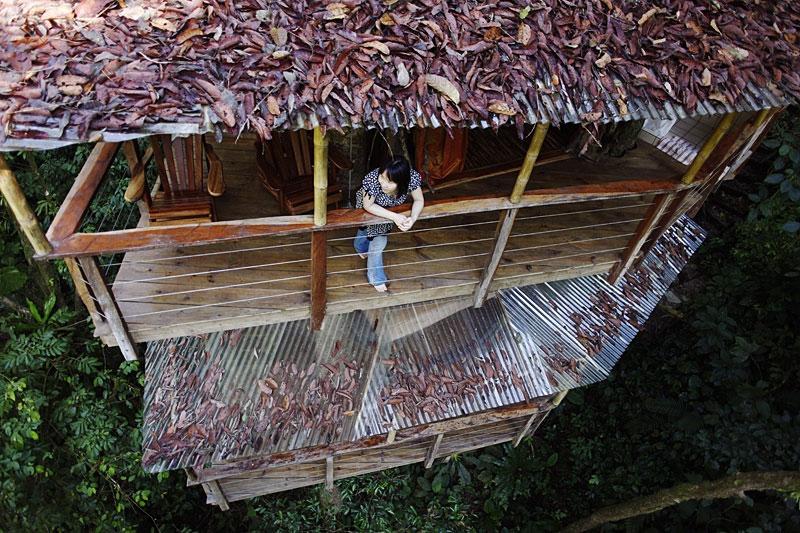 treehouse resort in costa rica finca bellavista (6)