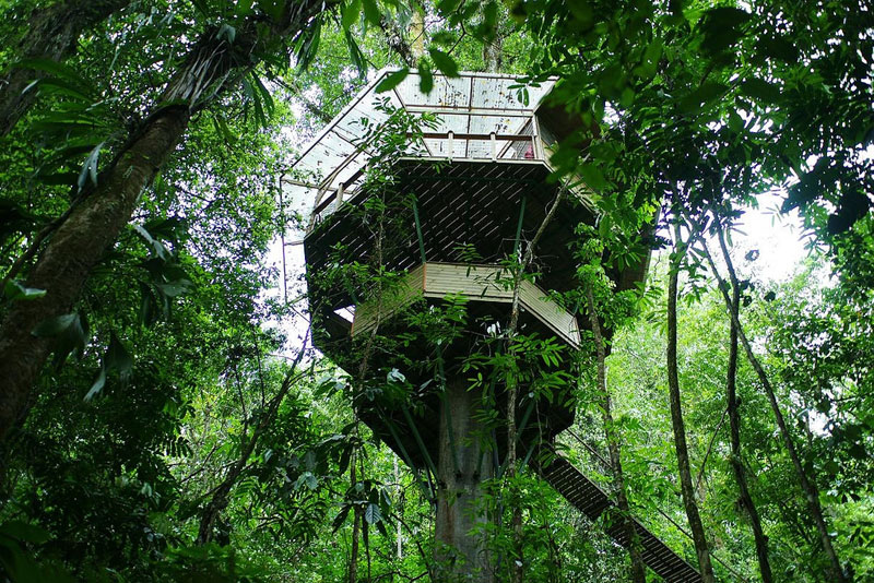 This couple built a real life ewok village in costa rica for Tree house costa rica