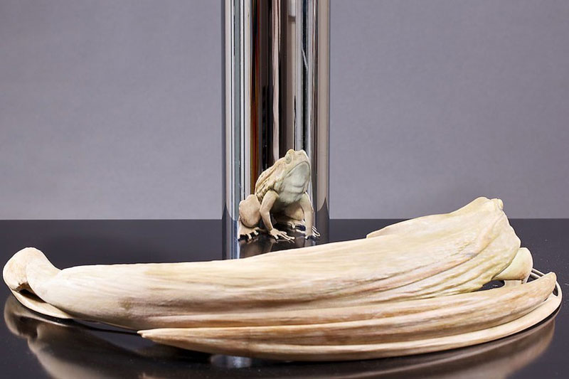 jonty hurwitz anamorphic sculpture kiss of chytrid (2)