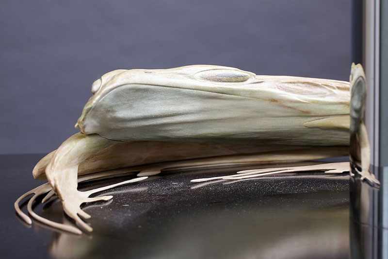 jonty hurwitz anamorphic sculpture kiss of chytrid (4)