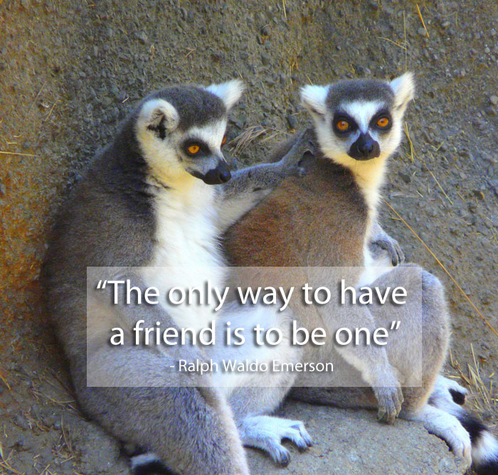 be a friend quote 15 Famous Quotes on Friendship