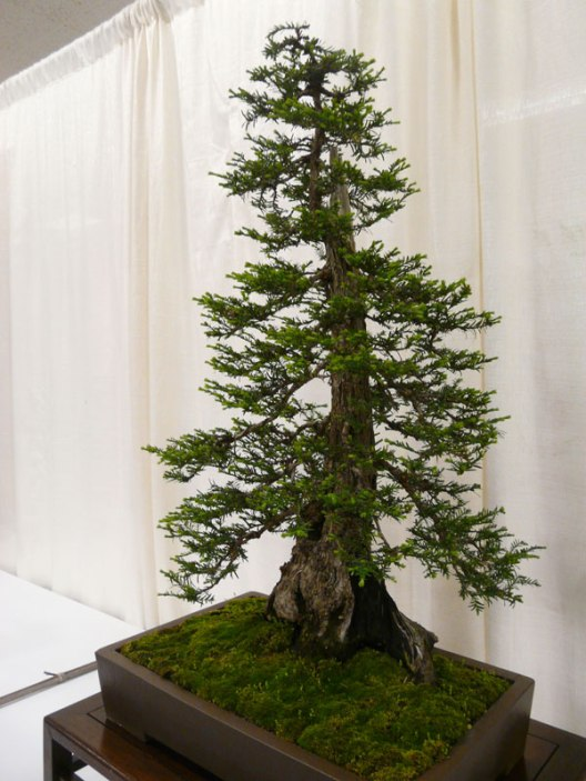 bonsai redwood tree 11 Miniature Sushi Made with a Single Grain of Rice