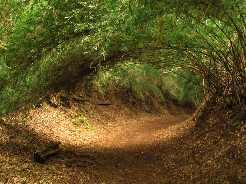 Picture of the Day: Forest'sEye