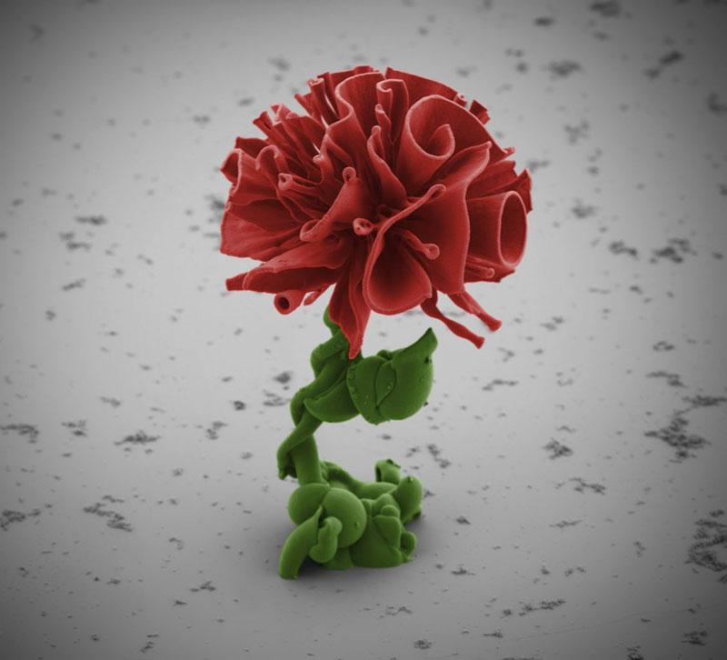 Self-Assembling Nano Flowers Grown inLab