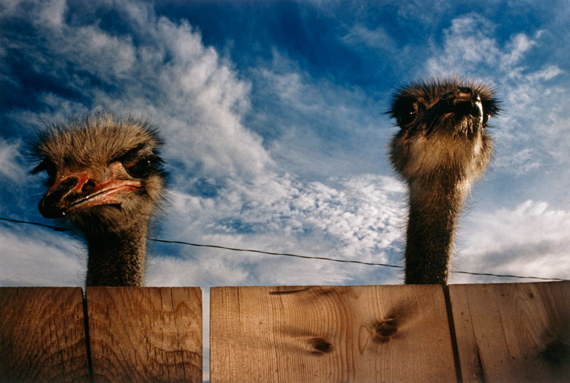 06_National_Geographic_521998