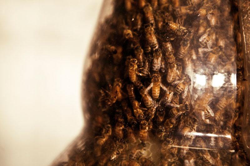3-bee printing dewar's sid lee ebeling group honeycomb sculptures (3)