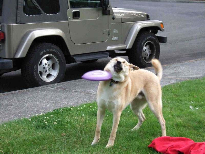 frisbee hitting dog in face The Shirk Report   Volume 222