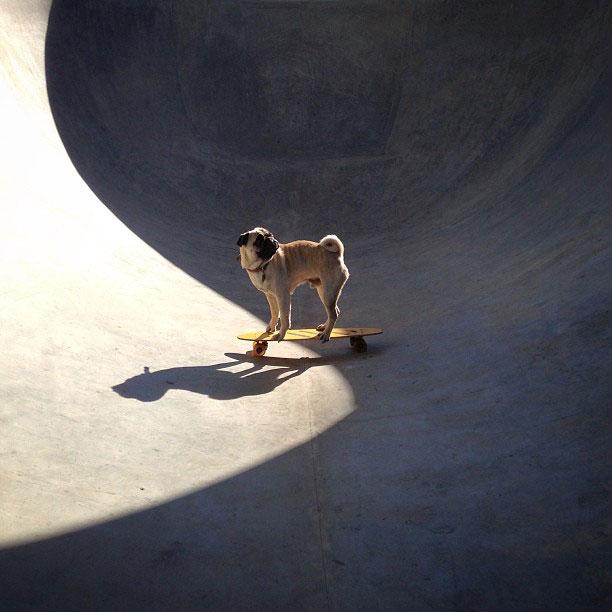 norm pug instagram (11)