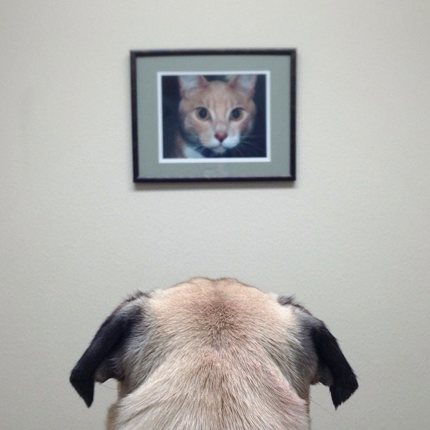 norm pug instagram (7)