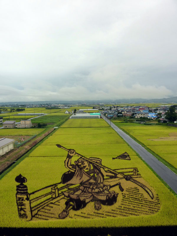 tanbo japanese rice field art (3)