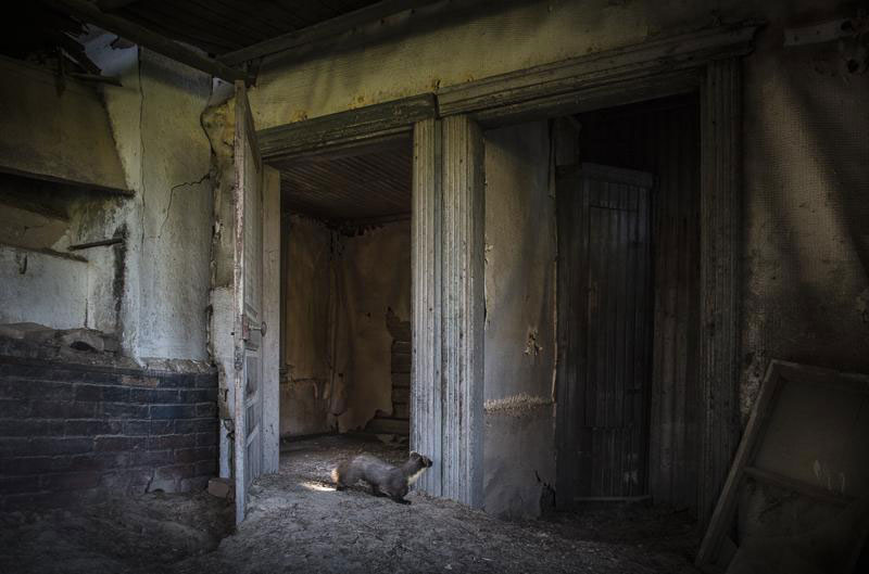 abandoned house in finland overtaken by animals kai fagerstrom (11)