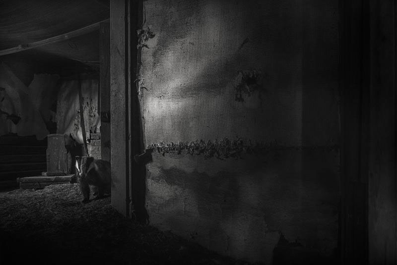 abandoned house in finland overtaken by animals kai fagerstrom (12)