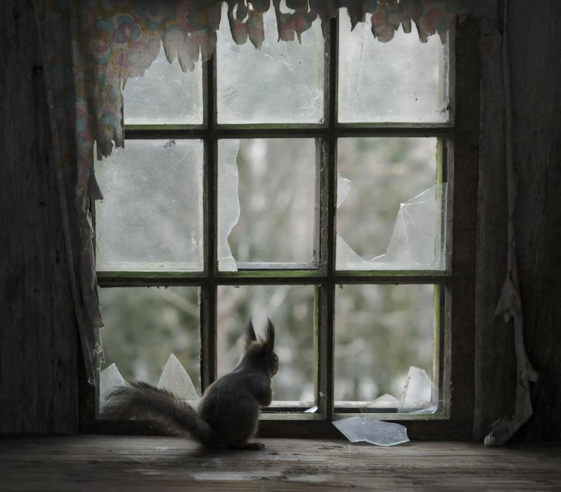 abandoned house in finland overtaken by animals kai fagerstrom (2)