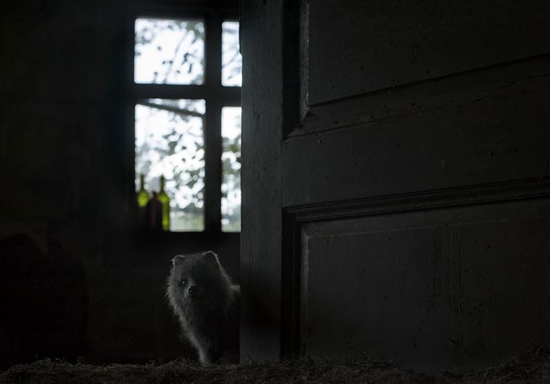 abandoned house in finland overtaken by animals kai fagerstrom (8)