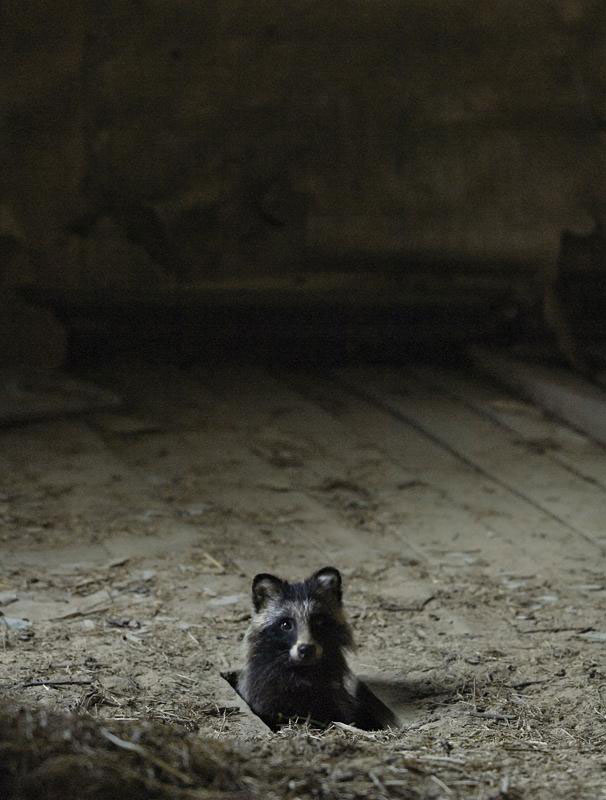 abandoned house in finland overtaken by animals kai fagerstrom (9)