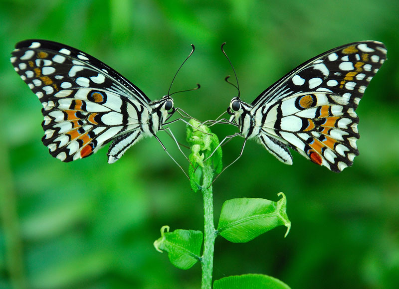 Picture of the Day: The Butterfly Effect