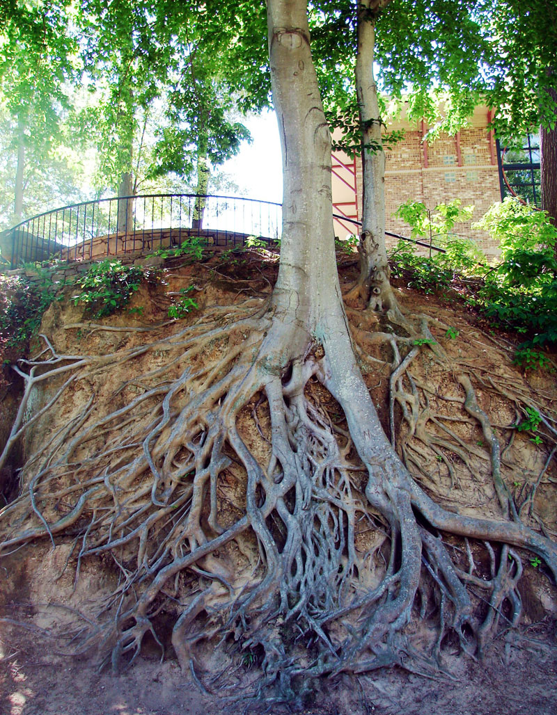 Picture Of The Day Tree Roots Exposed 171 Twistedsifter