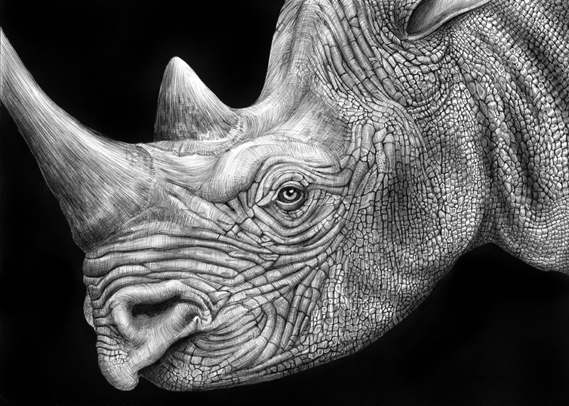 highly detailed pen and ink animal illustrations by tim jeffs 10 Artist Fulfills Late Mothers Dream to Visit Greenland and Create Art