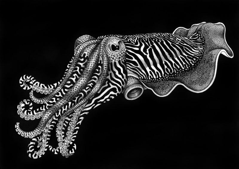 highly detailed pen and ink animal illustrations by tim jeffs (14)