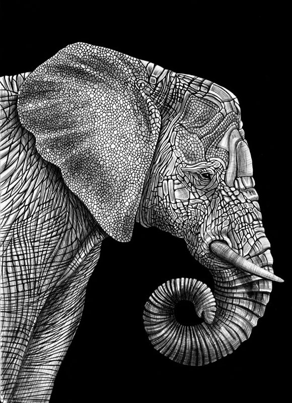 highly detailed pen and ink animal illustrations by tim jeffs (19)