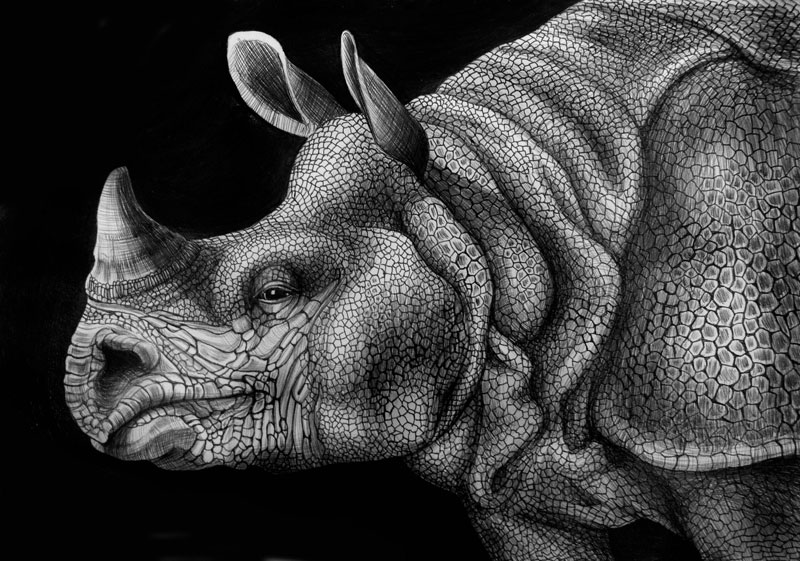 highly detailed pen and ink animal illustrations by tim jeffs 4 Samuel Gomez Draws a 90 Square Foot Masterpiece