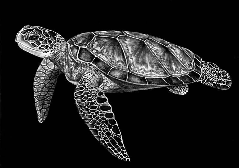 Detailed Animal Drawings Using Only Ink Twistedsifter