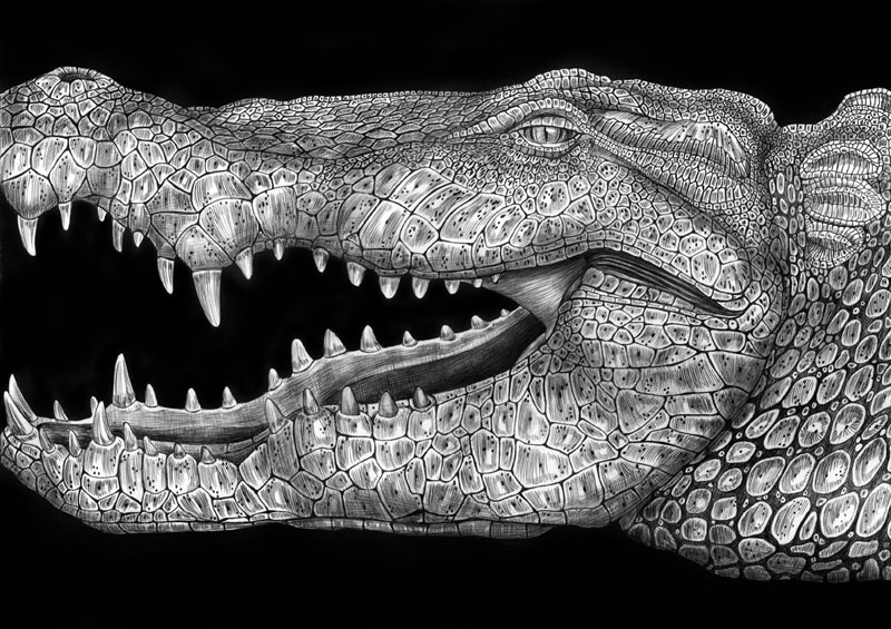 highly detailed pen and ink animal illustrations by tim jeffs (6)
