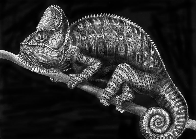 Detailed Animal Drawings Using Only Ink «TwistedSifter