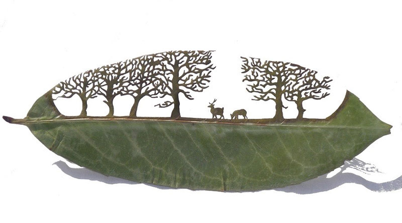 leaf cutting art lorenzo duran 6 Stitching Leaves by Hillary Fayle