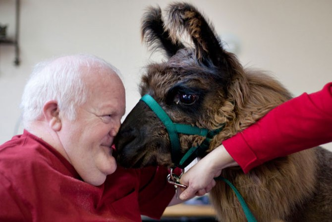 therapy llamas bring smiles to sick and elderly jen osborne colors magazine (1)